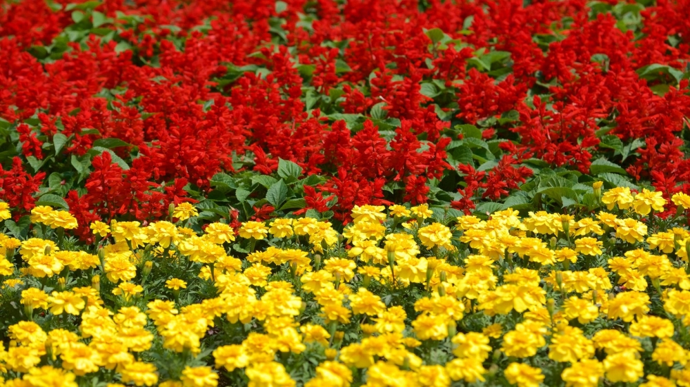 The National Flowers of Southeast Asian Nations