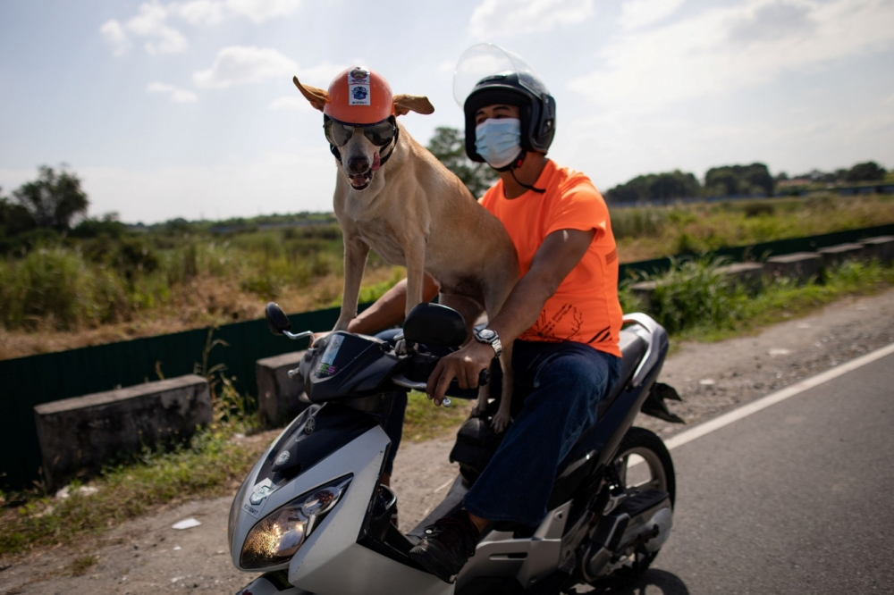 Biker Dog Bogie Thrills Fans as He Crosses Philippine highways