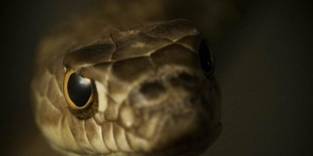 Scientists Find Shocking New Snake Species in Philippines