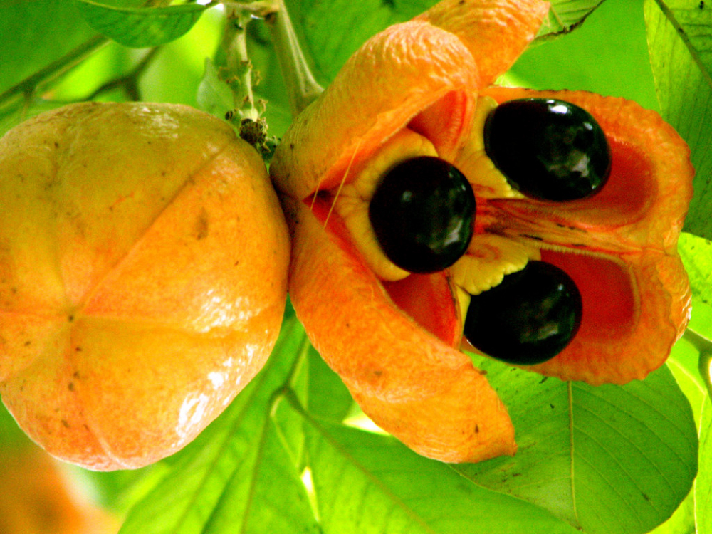 10 Fruits Around the World You Might Haven't Tried It