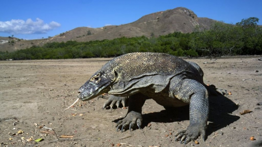 Travelling to Komodo Island? Here Are Tips You Need to Know