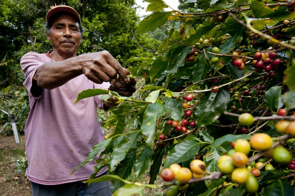 South-East Asia's largest coffee producer