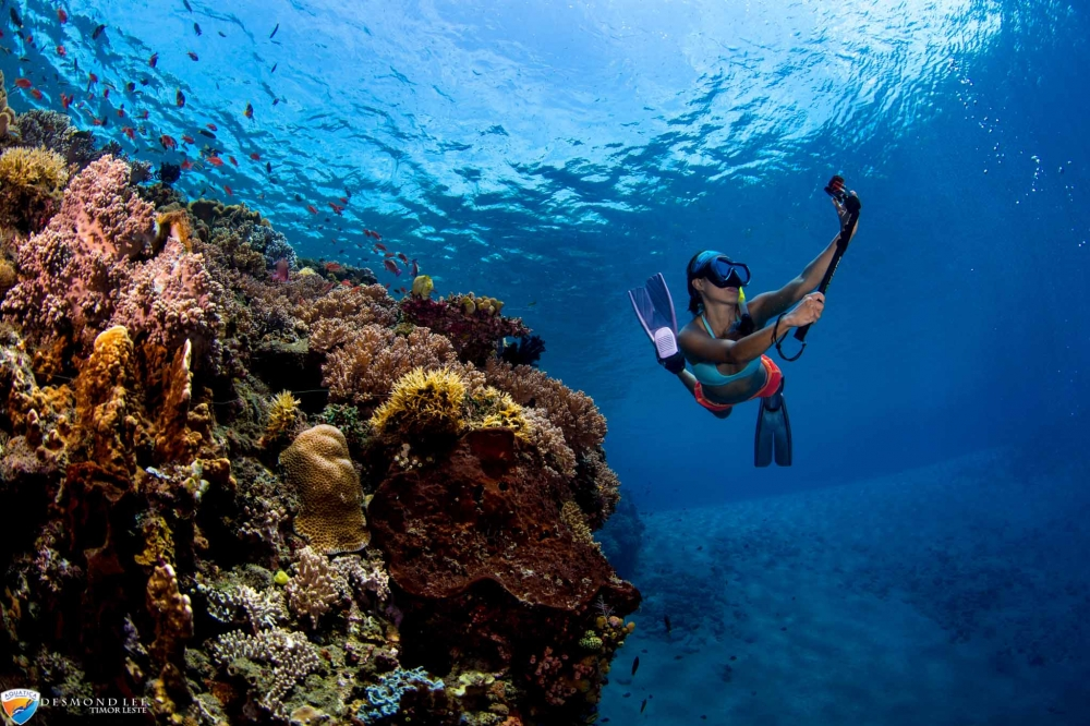 (Photos): Timor Leste's Incredible Marine Life. Pictures You Wouldn't Believe