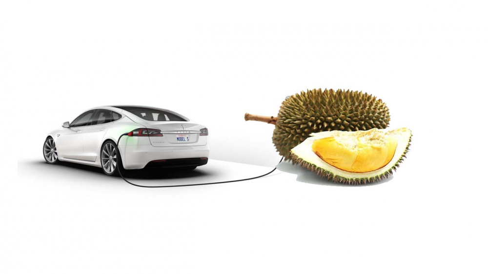 Durian May Soon be The Best Battery for Electric Vehicles and Gadgets