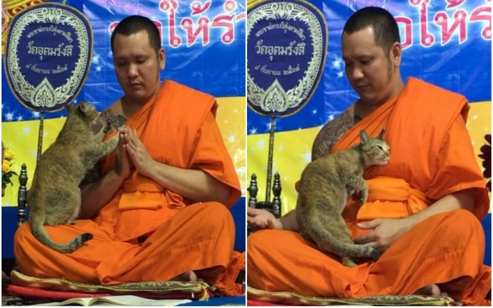 [VIRAL] Watch Thai Cat Tests Buddhist Monk Concentration during New Year Prayers