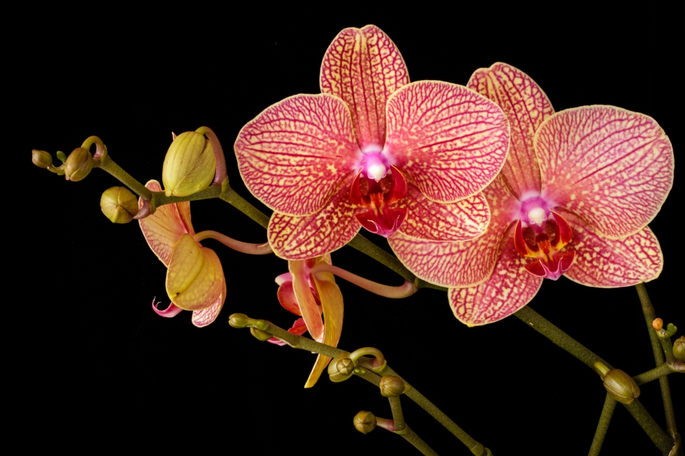 160 Orchid Species Discovered in Indonesia's Bengkulu. Some, You Won't Find Them Elsewhere!