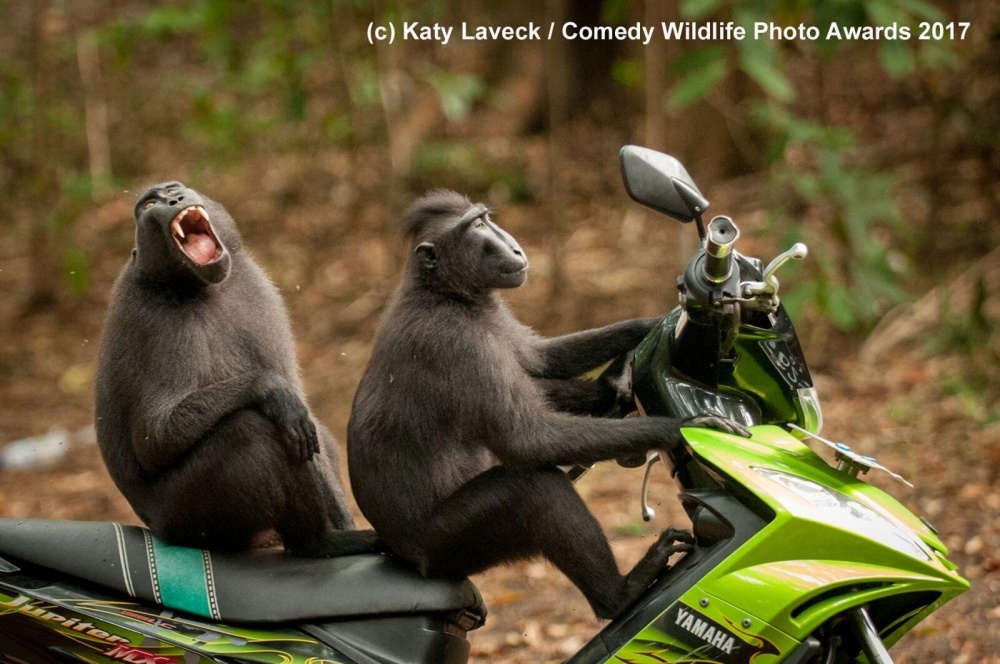 Photos : The Funniest Wild Animals Photos Of 2017