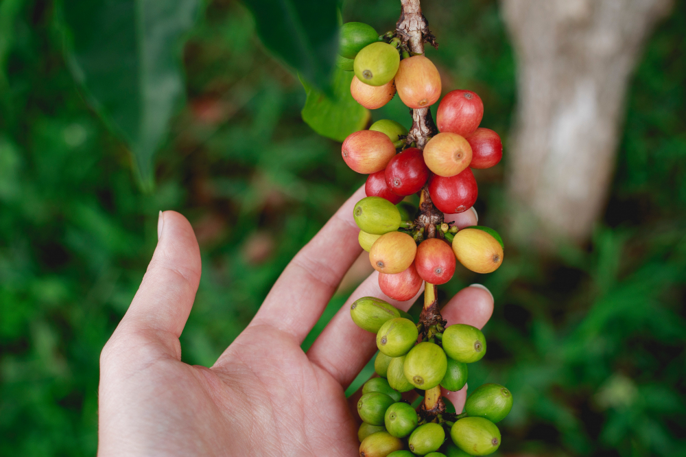 Top 5: World's Most Expensive Coffee