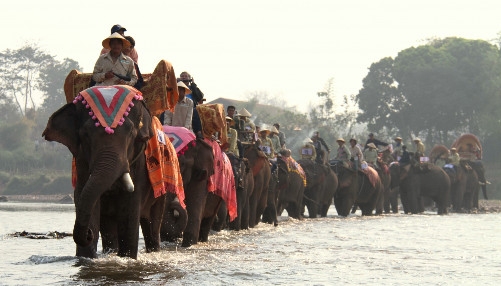Elephants on Parade in Laos to Raise Awareness about the Animals