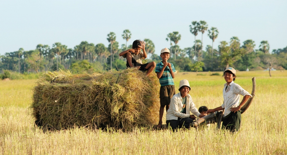 Good Harvests For Cambodia This Year, But Says Who?