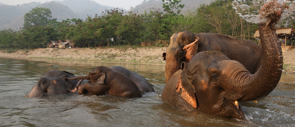 Chiang Mai's Most Responsible Animal Sanctuary