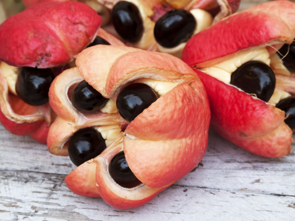 You Might Haven't Tried These 10 Fruits Before