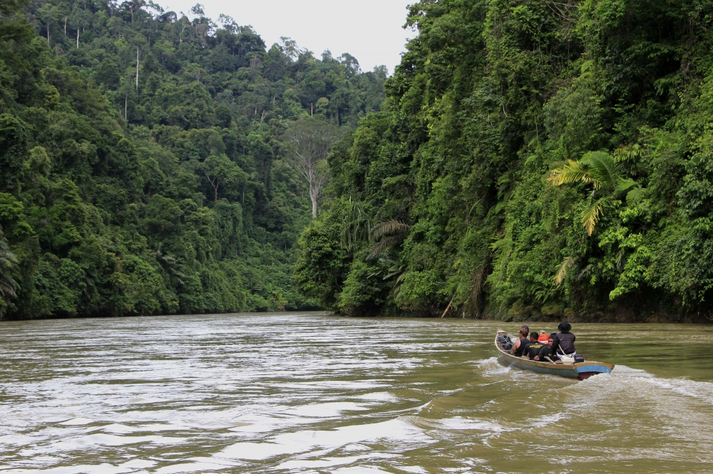 """If the Amazon Rainforests are the Lungs of the Earth, this Place is its heart"""