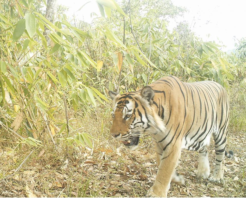 Last Remaining Wilderness: Camera Trap in Burma Captured Rare Wildlife Animals