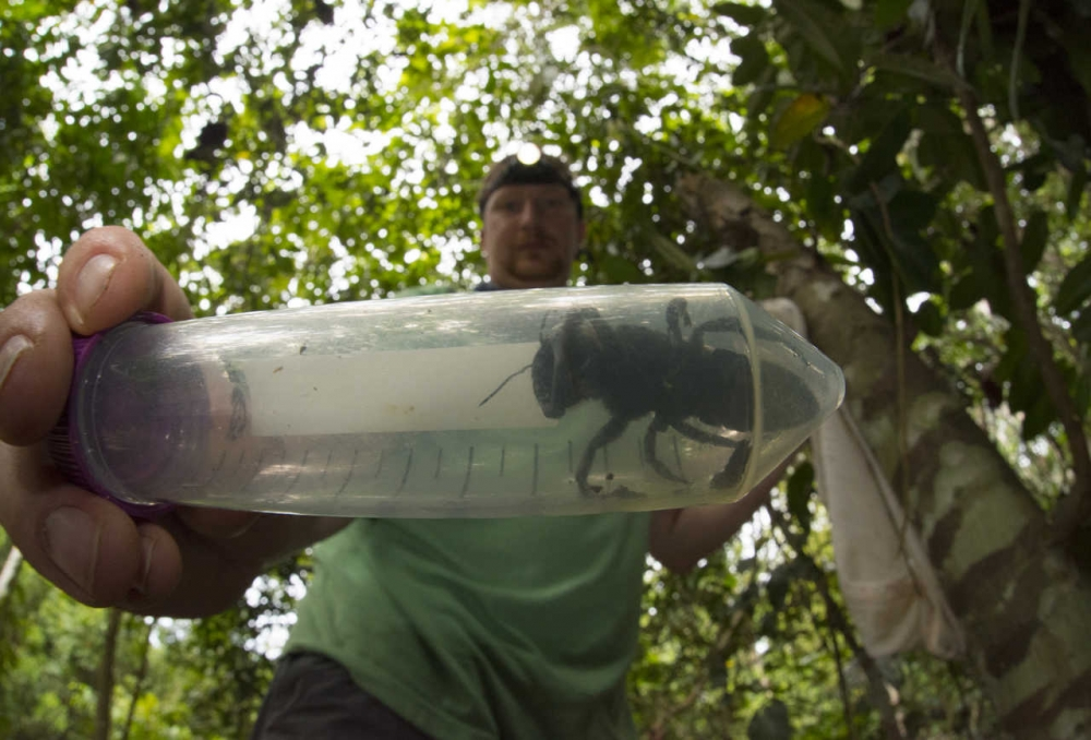The World's Biggest Bee Thought to Be Extinct Was Just Rediscovered.