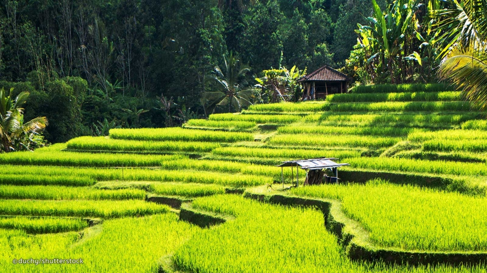 13 Things You Will Miss After Visiting Bali