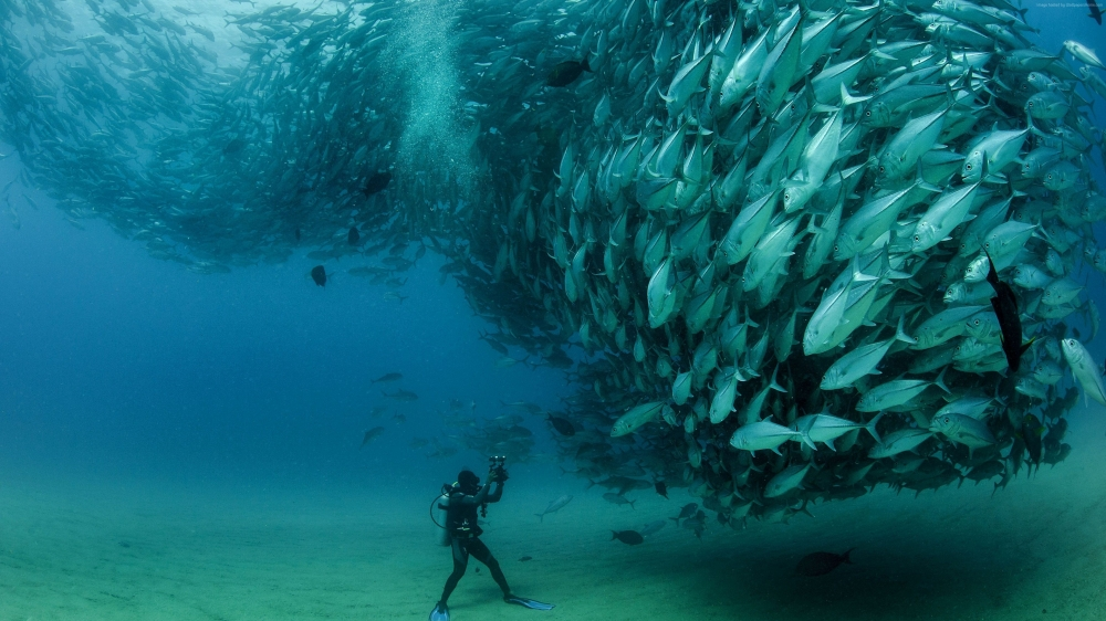 The 12 Most Incredible Underwater Environments On Earth