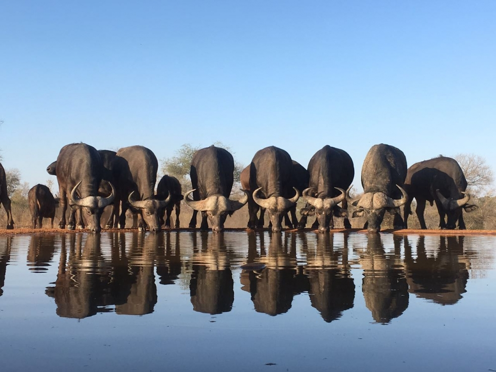 Top Six Amazing 'Safari' Experiences Outside Africa